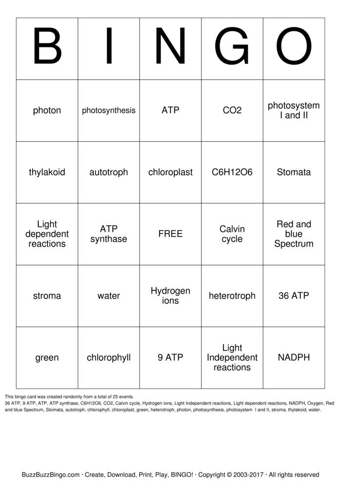 Download Photosynthesis Bingo Cards